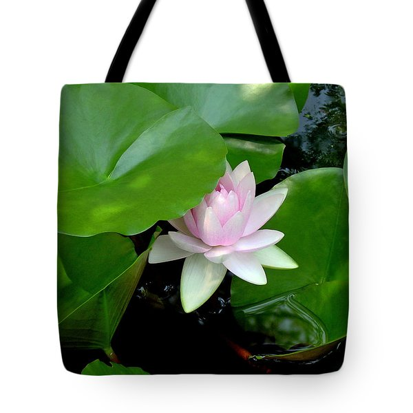 Peeking Out Tote Bag by Suzanne Gaff