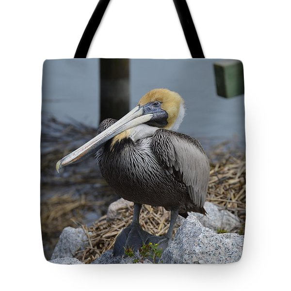 Tote Bag featuring the photograph Pelican On Rocks by Judith Morris