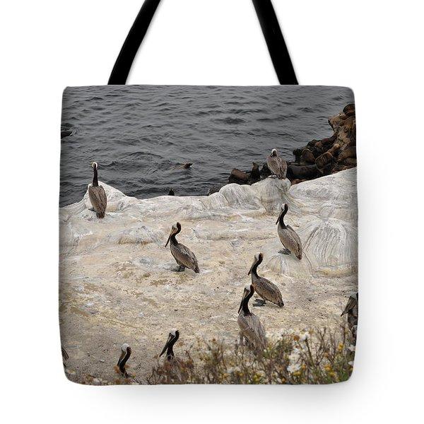 Pelicans Seals N Daisies  Tote Bag