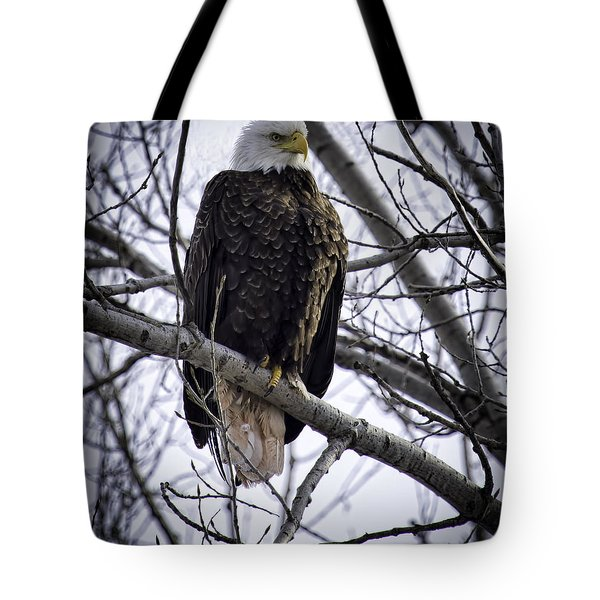 Perched Adult American Bald Eagle Tote Bag