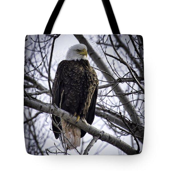 Perched Adult American Bald Eagle Tote Bag