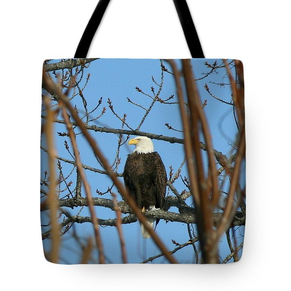 Perched American Bald Eagle  Tote Bag by Neal Eslinger