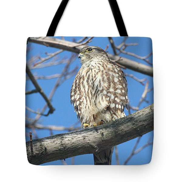 Perched Merlin Tote Bag