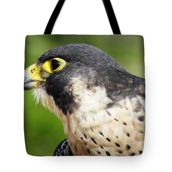 Tote Bag featuring the photograph Peregrine Falcon by Cynthia Guinn