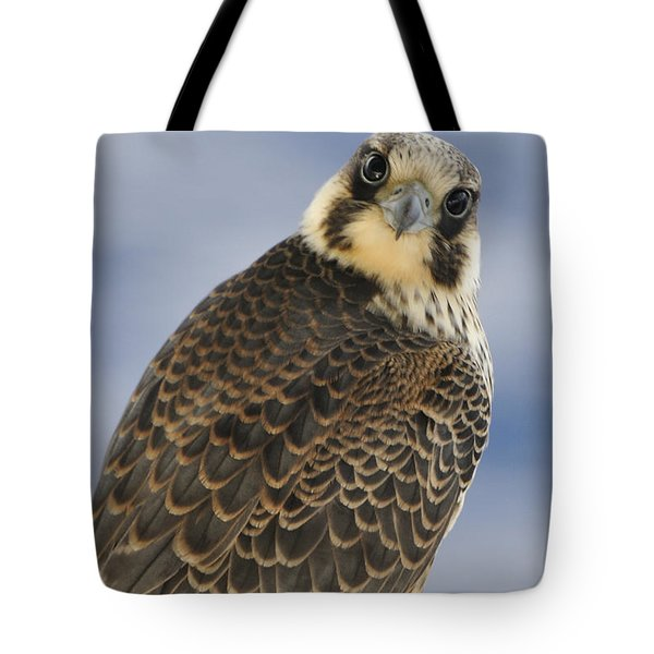 Peregrine Falcon Looking At You Tote Bag