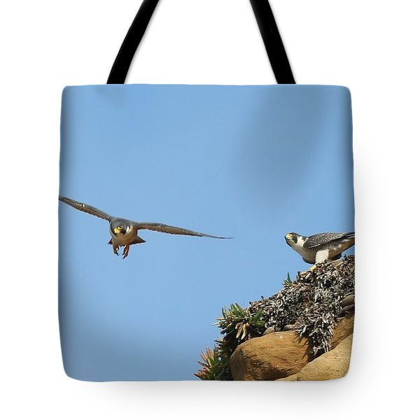 Peregrine Falcons - 1 Tote Bag