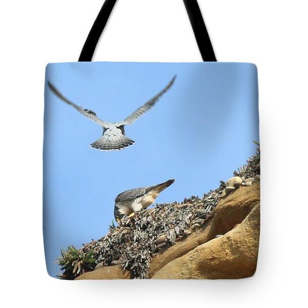 Peregrine Falcons - 2 Tote Bag