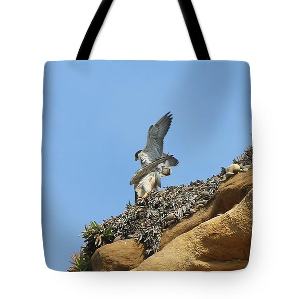 Peregrine Falcons - 3 Tote Bag
