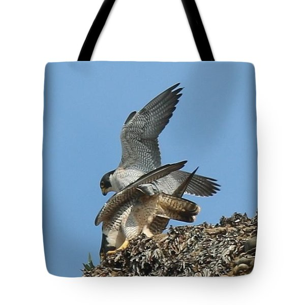 Peregrine Falcons - 4 Tote Bag