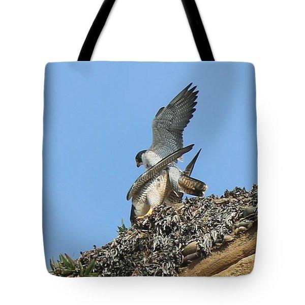 Peregrine Falcons - 5 Tote Bag