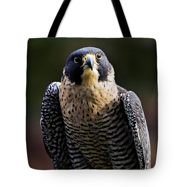 Peregrine Focus Tote Bag by Mary Jo Allen