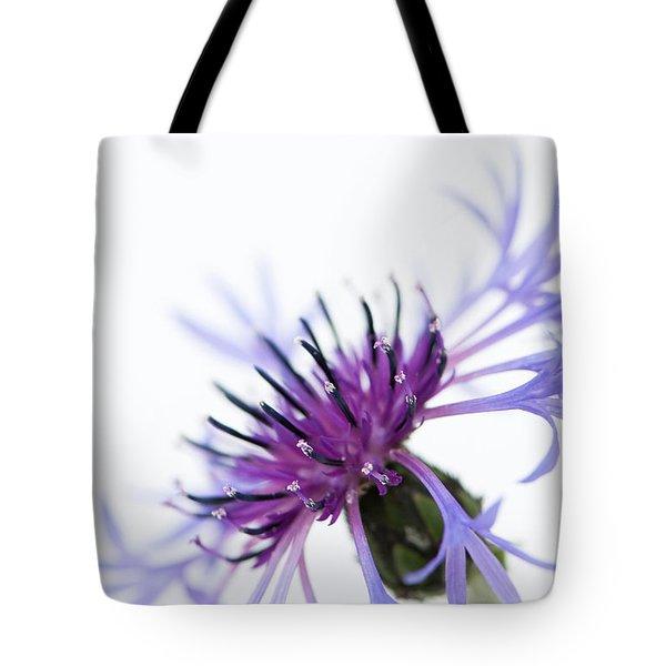 Perennial Cornflower Tote Bag by Anne Gilbert