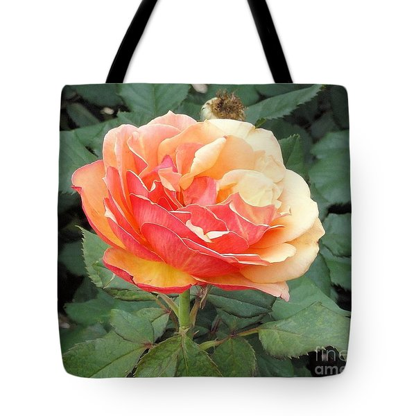 Tote Bag featuring the photograph Perfect Rose by Janette Boyd