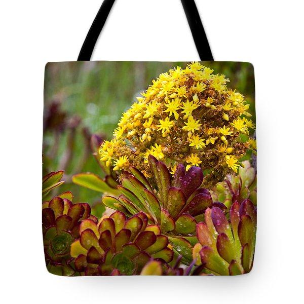 Petal Dome Tote Bag by Melinda Ledsome