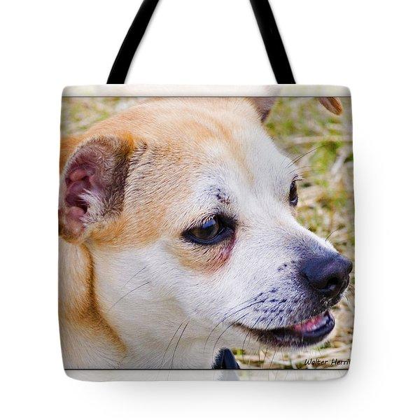 Pets Tote Bag