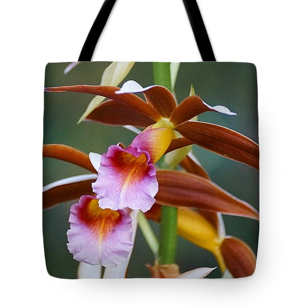 Phaius Tankervilliae Orchid Tote Bag by Blair Wainman