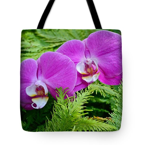 Phalaenopsis Moth Orchids Tote Bag by Venetia Featherstone-Witty