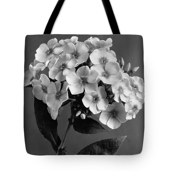 Phlox Blossoms Tote Bag