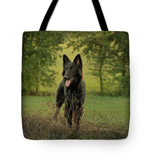 Phoenix - Early Evening Tote Bag by Sandy Keeton