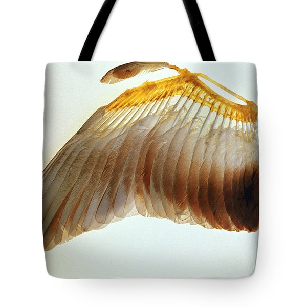 Pigeon Wing Tote Bag by Biophoto Associates