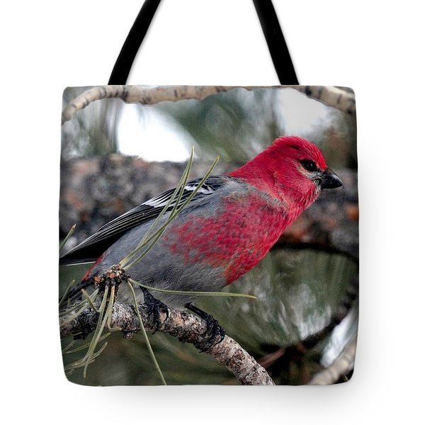 Pine Grosbeak On Ponderosa Pine Tree Tote Bag