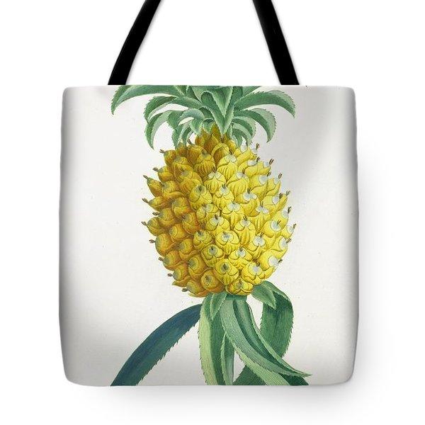 Pineapple Engraved By Johann Jakob Haid Tote Bag by German School