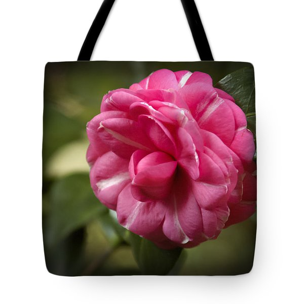 Tote Bag featuring the photograph Pink And White Stripped Camellia by Penny Lisowski
