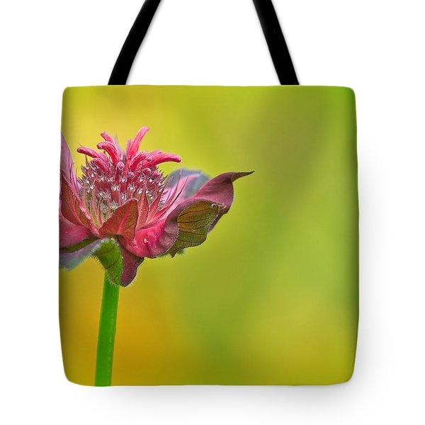 Pink Jester In Greene Tote Bag by Sylvia J Zarco