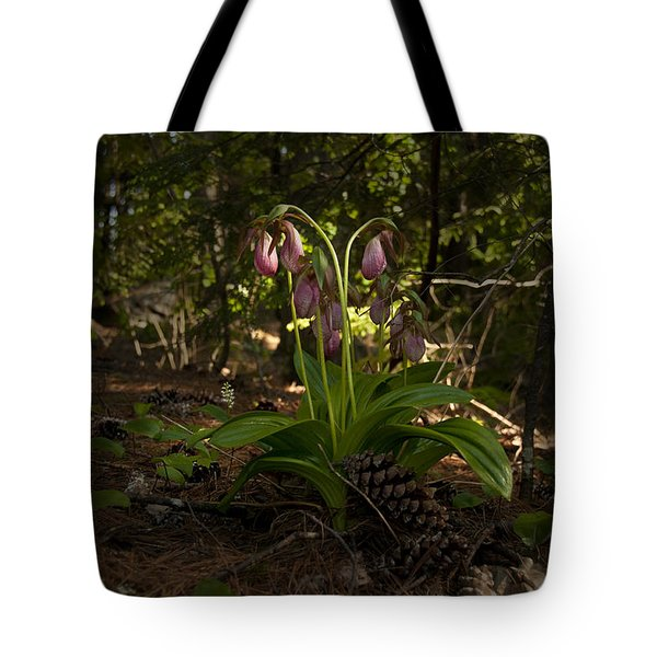 Pink Lady Slipper 2 Tote Bag by Daniel Hebard