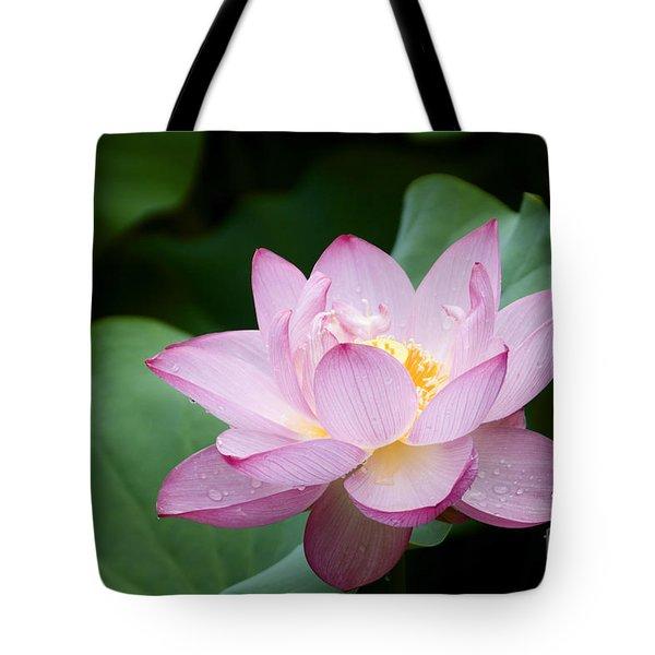 Pink Lotus Flower Tote Bag by Oscar Gutierrez