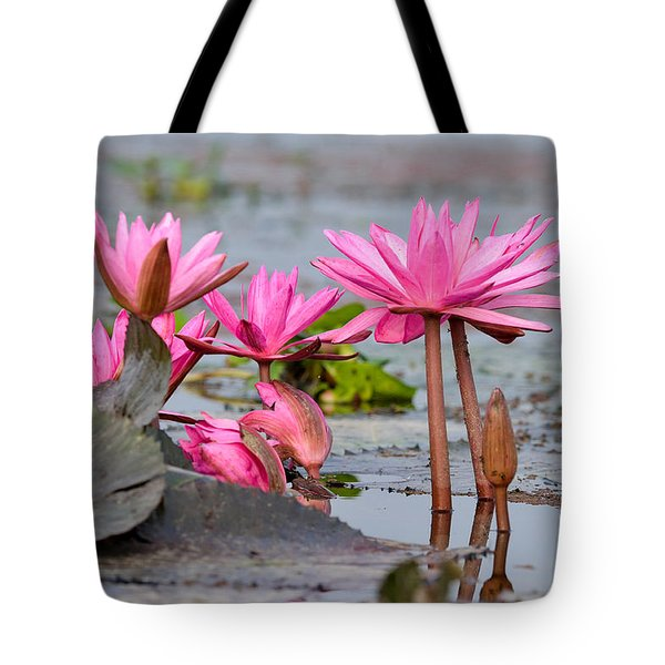Pink Lotuses Tote Bag
