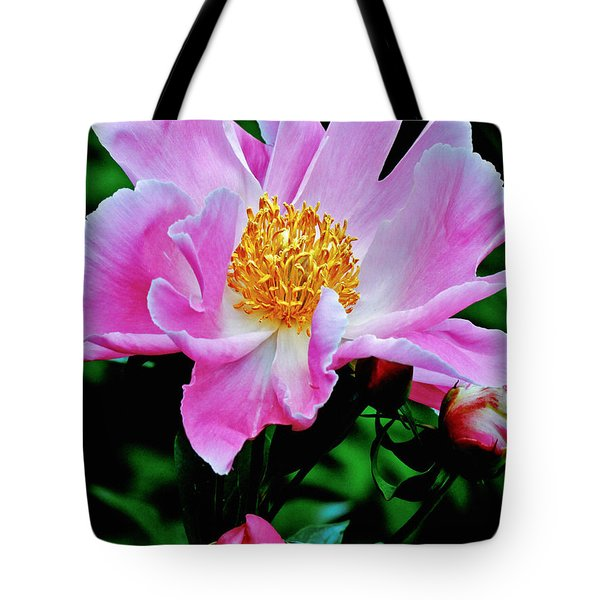 Pink Peony Garden  Tote Bag by Carol F Austin