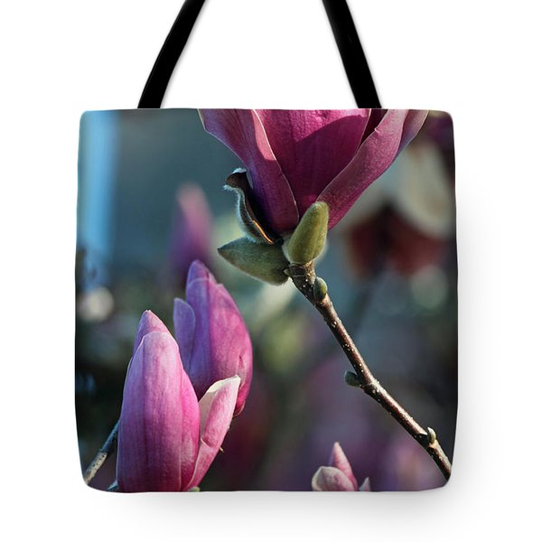 Pink Saucer Magnolia II Tote Bag by Suzanne Gaff