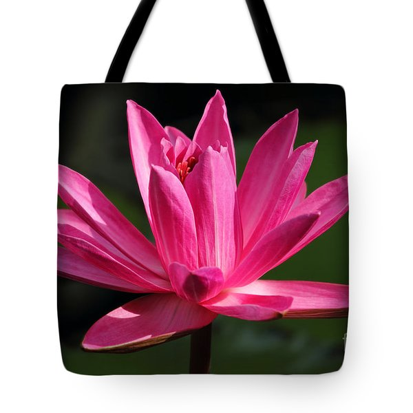 Pink Water Lily Tote Bag by Meg Rousher