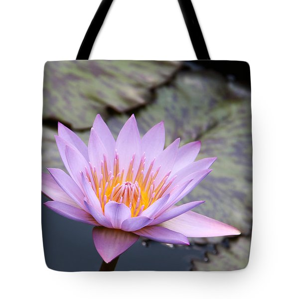 Pink Water Lily At Dusk Tote Bag by Yvonne Wright