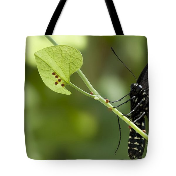 Tote Bag featuring the photograph Pipevine Swallowtail Mother With Eggs by Meg Rousher