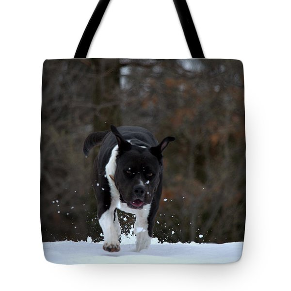 Tote Bag featuring the photograph Pit At Play by Cathy Shiflett
