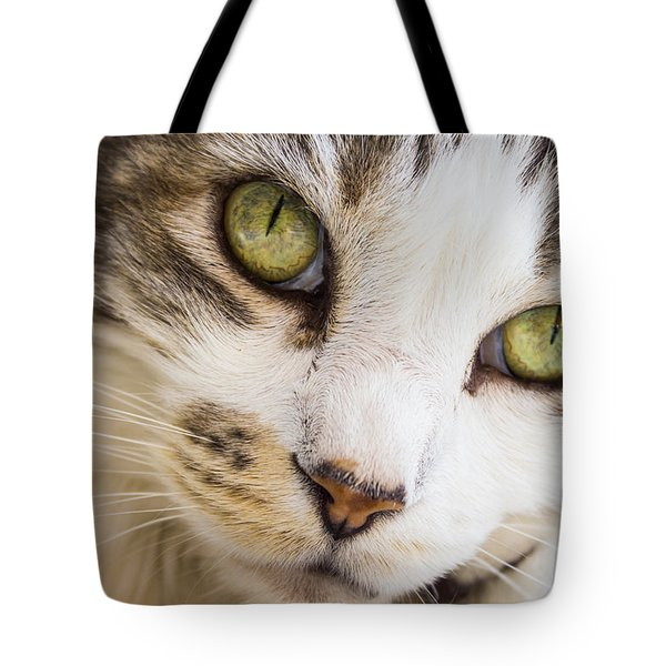 Tote Bag featuring the photograph Pixie-bob 1 by Leigh Anne Meeks