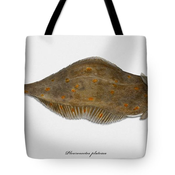 Plaice Pleuronectes Platessa - Flat Fish Pleuronectiformes - Carrelet Plie - Solla - Punakampela Tote Bag