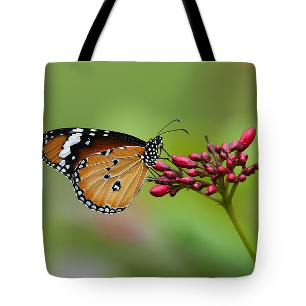Plain Tiger Or African Monarch Butterfly Dthn0008 Tote Bag