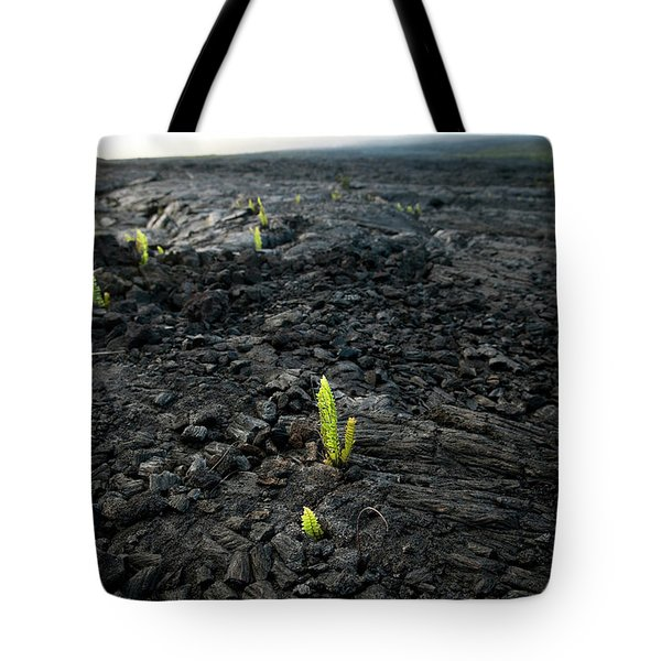 Plants Begin To Grow Out Of Dried Lava Tote Bag