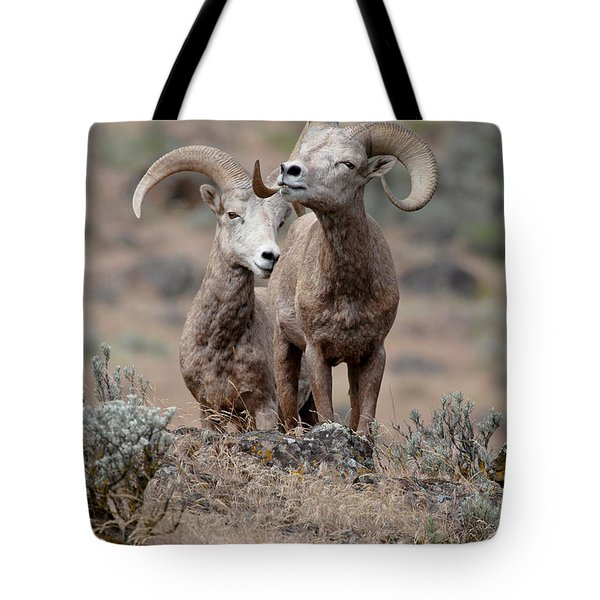 Tote Bag featuring the photograph Playfull Rams by Athena Mckinzie
