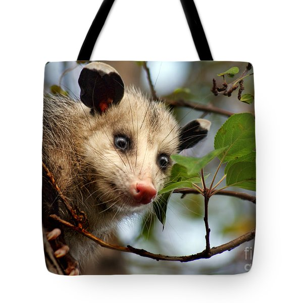 Playing Possum Tote Bag by Nikolyn McDonald