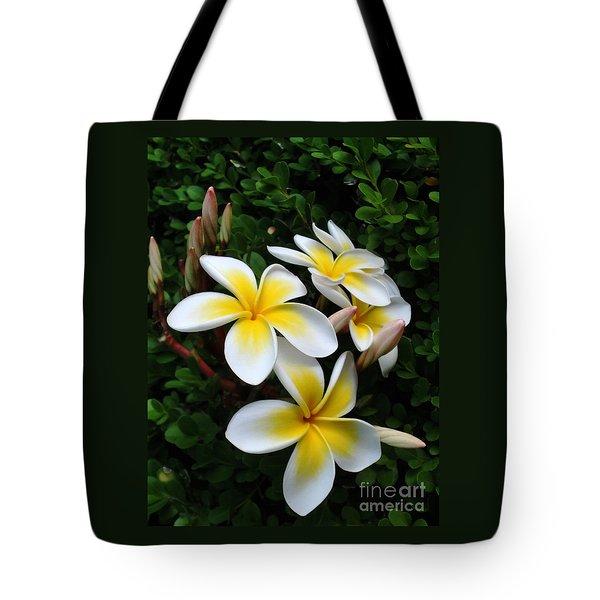 Plumeria In The Sunshine Tote Bag by Kaye Menner