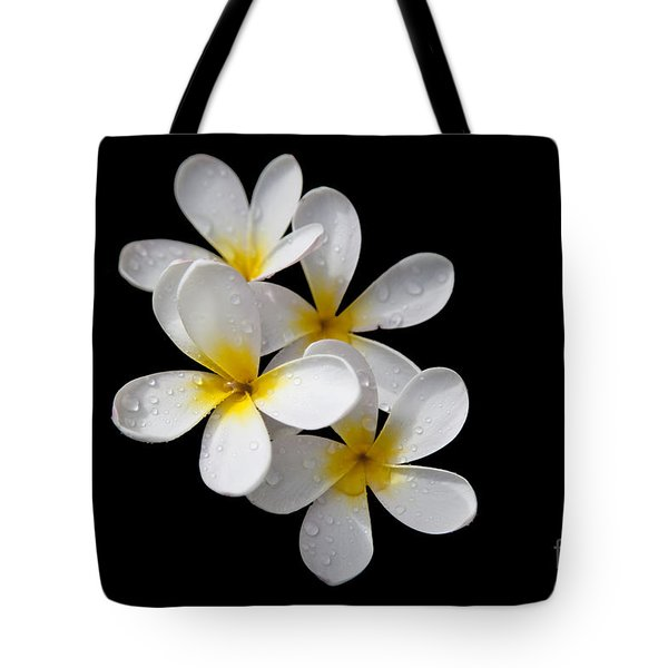 Tote Bag featuring the photograph Plumerias Isolated On Black Background by David Millenheft
