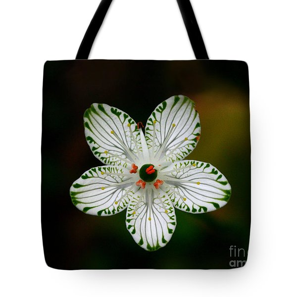 Tote Bag featuring the photograph Pocosin Manifest by Paul Rebmann