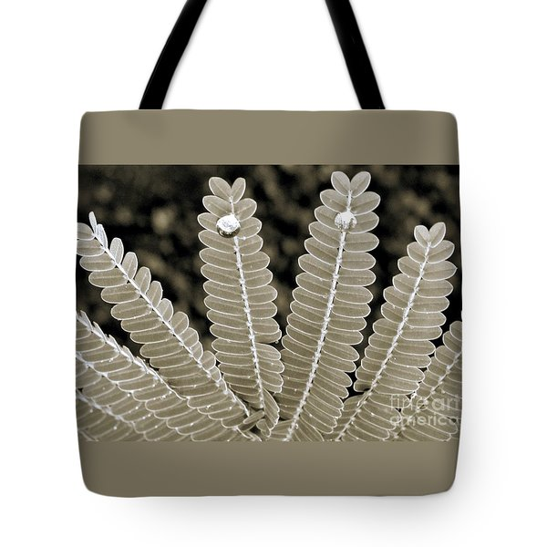 Tote Bag featuring the photograph Poinciana Leaves- Crowned by Darla Wood