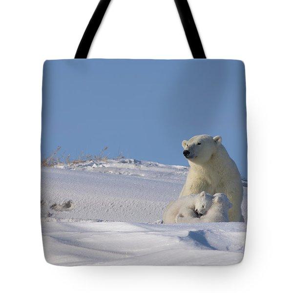 Polar Bear Sits Outside Her Den Tote Bag