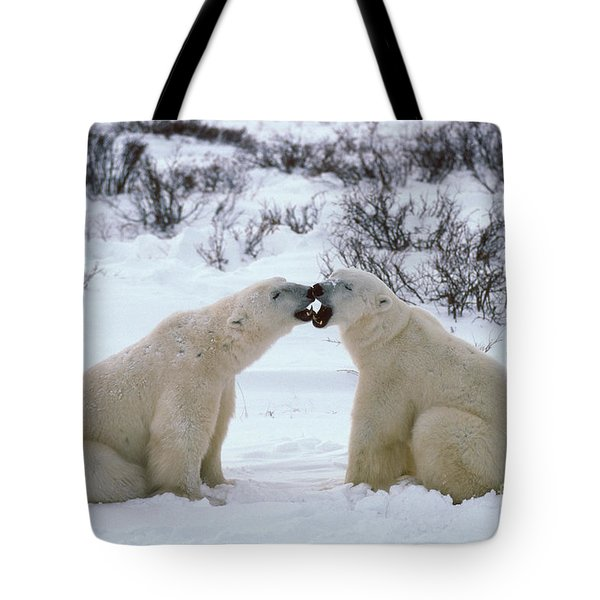 Polar Bears Sparring Tote Bag by Francois Gohier