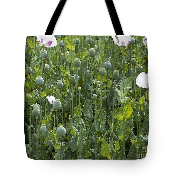 Poppy Field Tote Bag by Michal Boubin